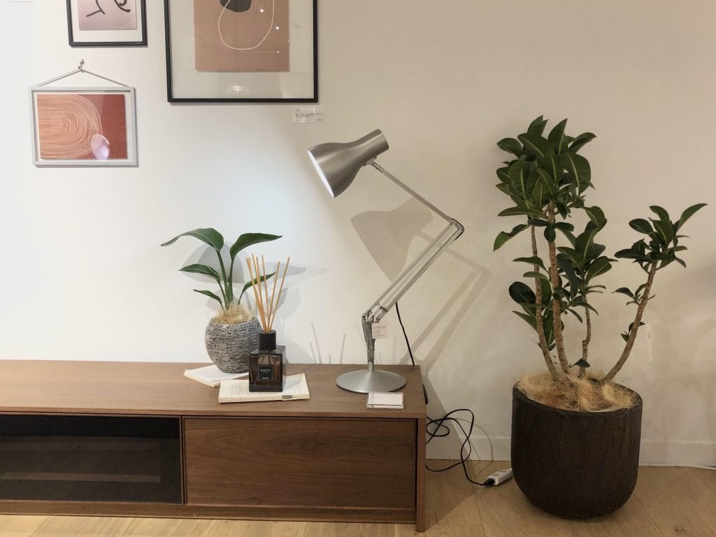 家具とグリーン